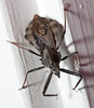20110924 Bug outside my front door cl-2