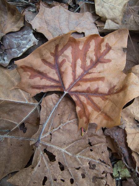20141021 (1517) - autumn leaves, Leigh Farm Park, Durham NC