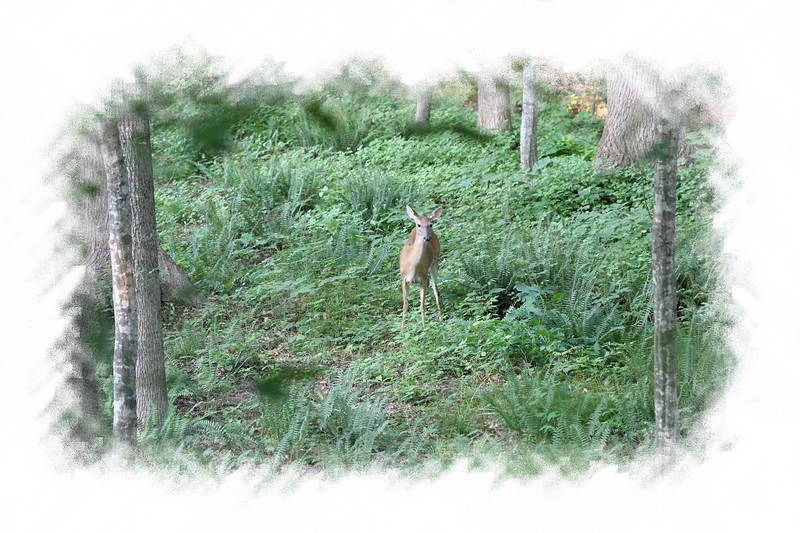 20070607 Deer near our backyard 4 [edgefade05 frame]