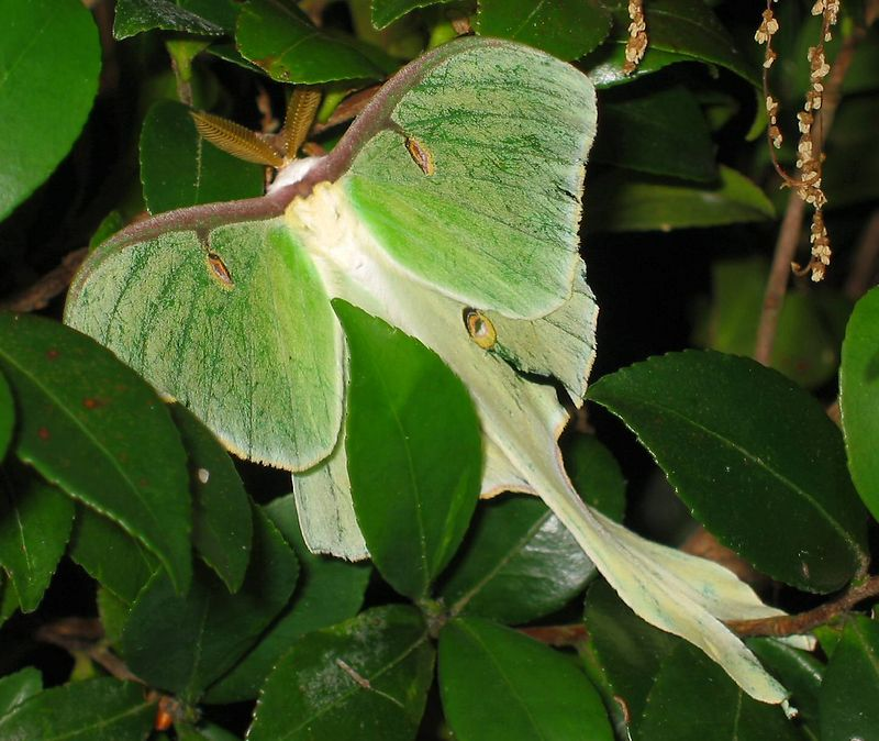 Green and white moth 3