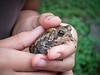 00aFavorite 20190608 (1248) Toad 10yo Anu holding in Durham yard