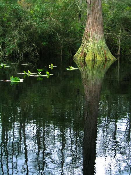 Okefenokee Swamp, Georgia - Homerville
