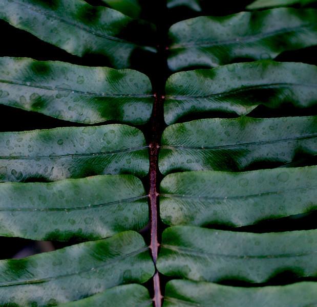 Taken at the Botanical Gardens, Atlanta, GA