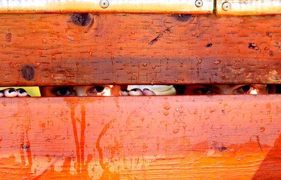 Peeking through - under the dock