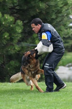 German Shepherd Sieger Show