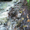 Video of Millbrook Mountain Path After Overnight Rains, ascending Millbrook Mountain after crossing Coxing Kill
