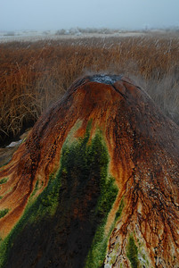 © Joseph Dougherty. All rights reserved.   Geothermal geyser boiling over, depositing minerals into a massive mound with colorful thermophilic bacteria growing along the rivulets of outflow.