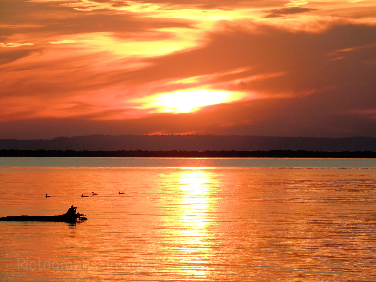 Sunrise & Waterfowl With Lake Superior