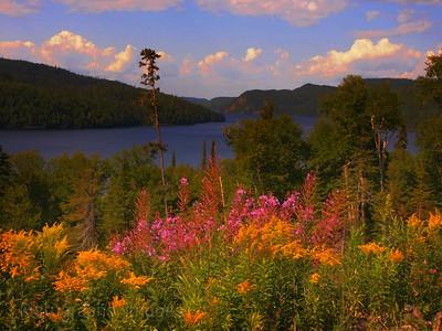Boreal Lake, Summer 2020