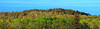 Lake Superior & The Forest