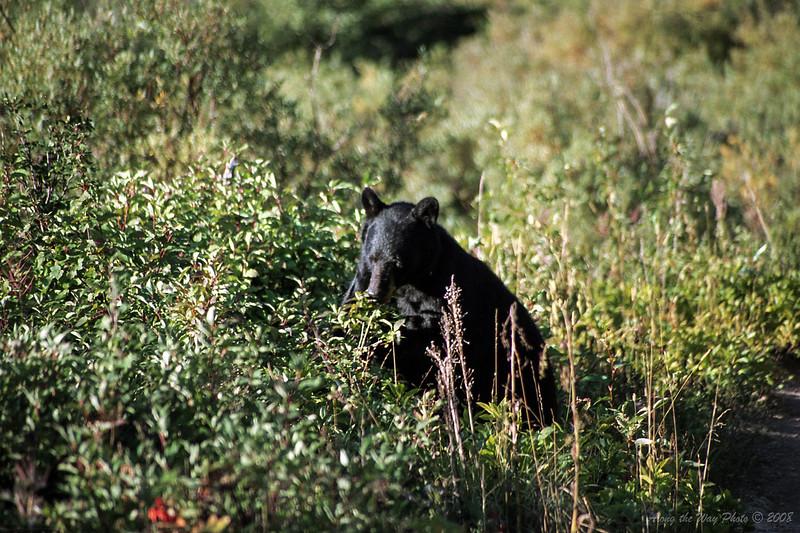 Bear-022