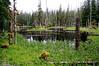 Glacier Bay forest trail
