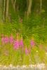 20110808_Zablotsky_33013301