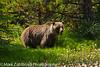 20110809_Zablotsky_13341334