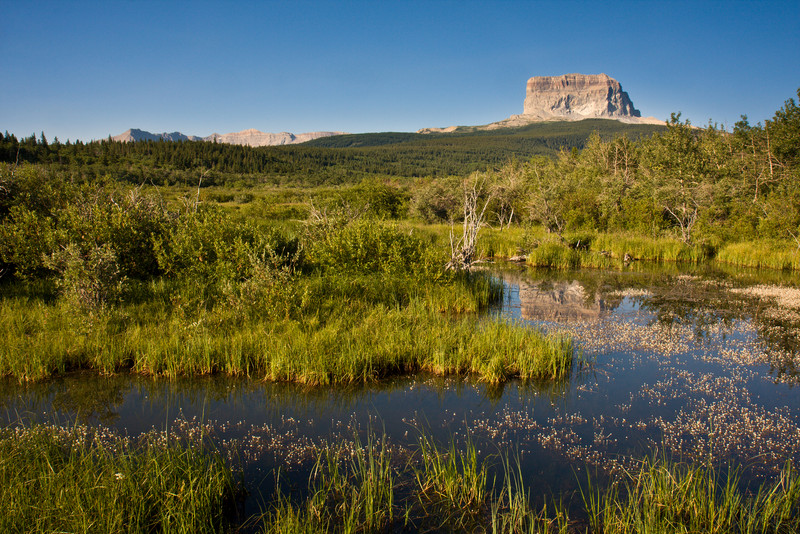 Chief Mountain and Marsh