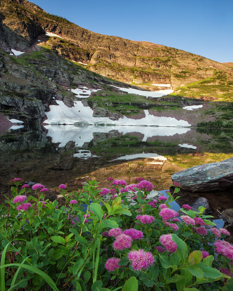 Spirea at Cobalt Lake