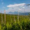 Glacier National Park 8-2020_V9A8730
