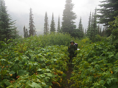 Day 3/5 - a wet mess in raspberry bush jungle, Glacier NP