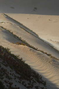 A wind-swept sand dune with ripples like waves across its surface, partially anchored by plants adapted to live among the shifting sands.