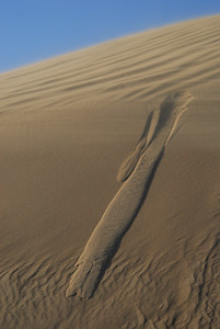 A wind-swept sand dune begins to cascade in a sand slide that runs downhill like water.