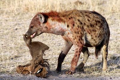 Hyenas 003