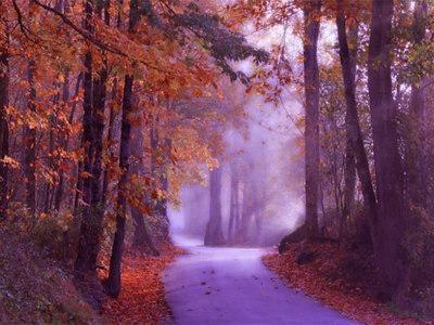 Fall fog road