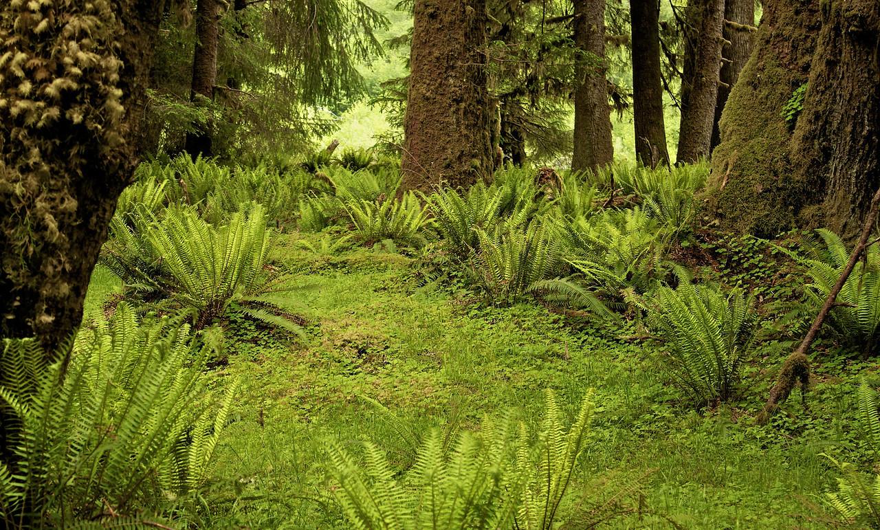 Fern Forest.