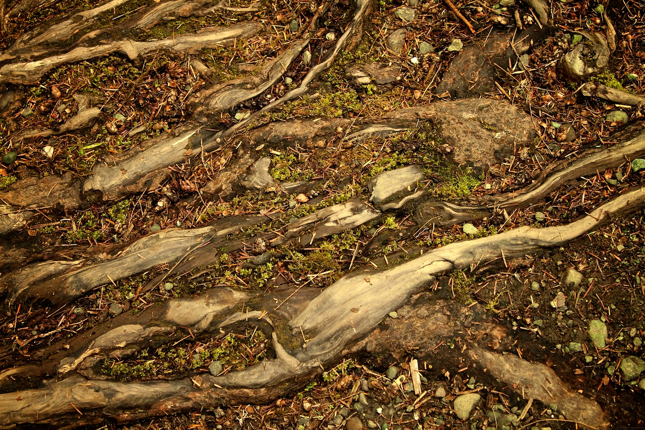 The forest floor.