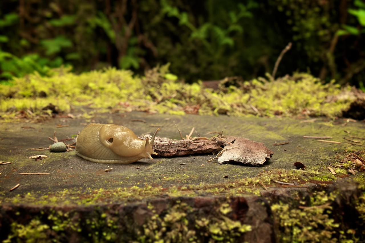 One of the slugs that call the rain forest their home.