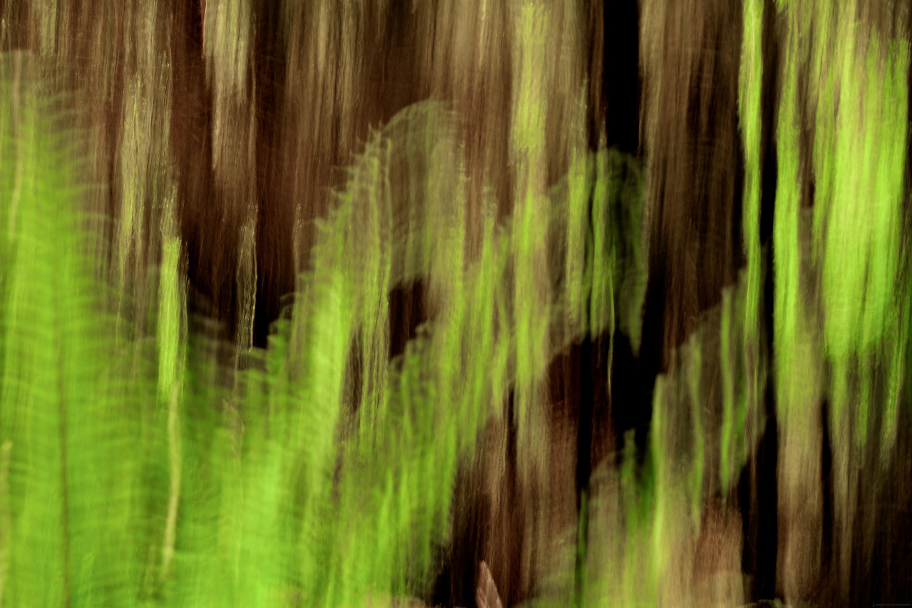 Fern Abstract.