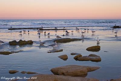 Views of the coquina and shorebirds along the beach at Washington Oaks Gardens State Park, Florida.