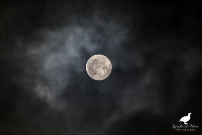Good Night Moon - Luna