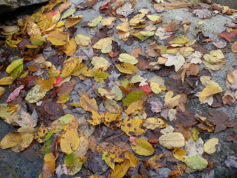When the leaves come falling down....<br /> In September when the leaves come falling down.