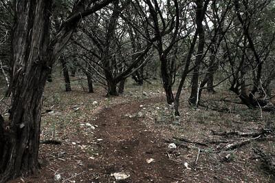 GCSNP_Interpretive_Trail_Run_20Nov11 (46)