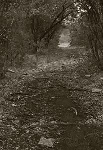 GCSNP_Interpretive_Trail_Run_20Nov11 (26)
