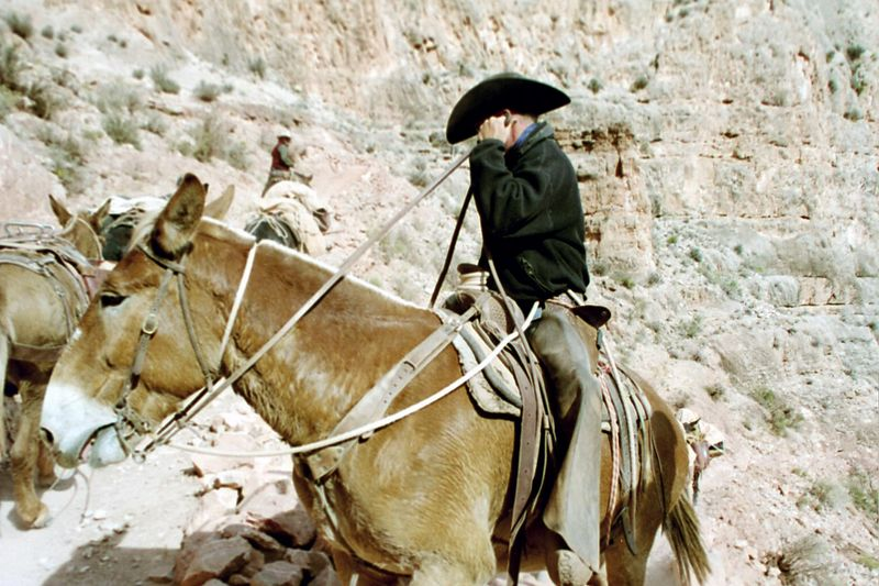 This guy trained his mules to be afraid of the Aggie logo