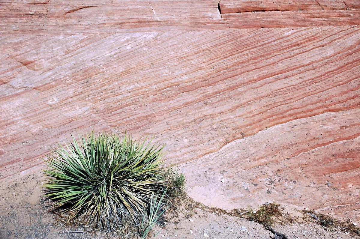 Zion National Park, eolian cross bedding