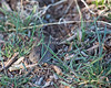 "Vole camouflage.  ""You can't see me."""