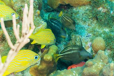 Orangespoted Filefish