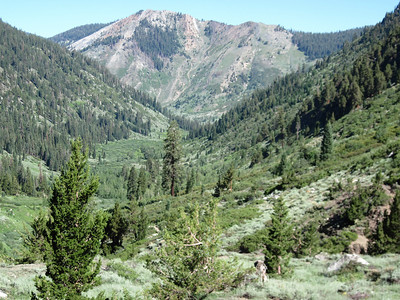 The view looking back north towards the trailhead after crossing Franklin Creek; Timber Gap at upper right.