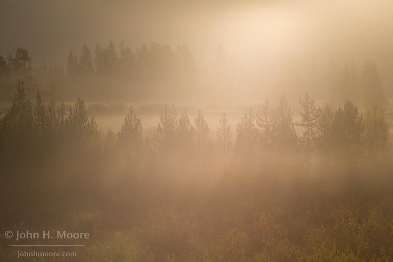 Morning sun backlights several rows of trees in Grand Teton National Park, Wyoming, USA