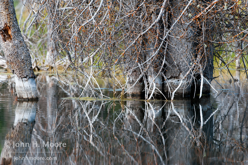 Reflections in a pond.  Grand Teton National Park, Wyoming.