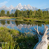 Dead tree and reflections in a beaver pond in front of the Teton Mountains; Grand Teton National Park, Wyoming.