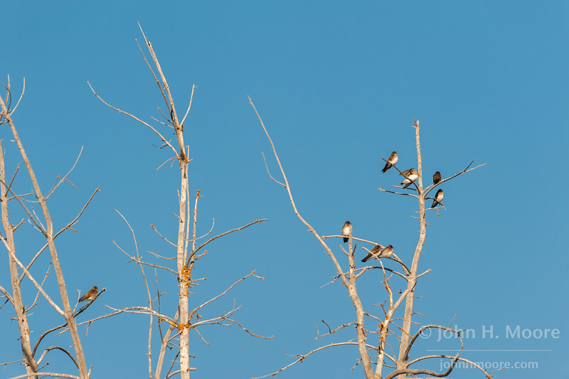 Birds on a tree in Grand Teton National Park, Wyoming.