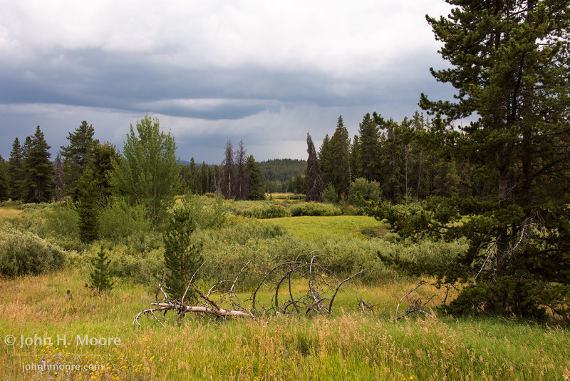 Storm clouds over a meadow in Grand Teton National Park, Wyoming