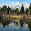 Beaver den near Schwabacher Landing in Grand Tetons National Park, Wyoming