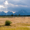 Sunbeams and bison on a stormy day in the Teton Mountains.  Grand Teton National Park, Wyoming.