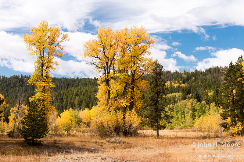 Fall color in Grand Teton National Park, Wyoming, USA