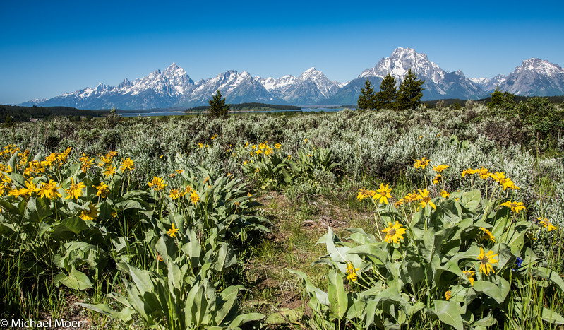 Spring Flowers and Mount Moran