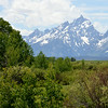 Grand Tetons Across The Valley